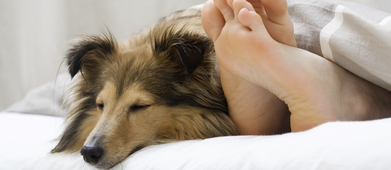 Here Is What Your Dog Is Trying To Tell You Through These Common Behaviours